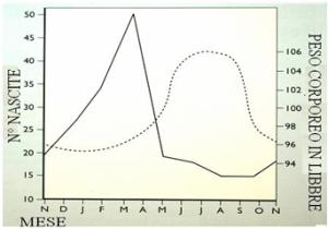 Rapporto tra peso corporeo ed indice di fertilità nelle popolazioni indigene del deserto del Kalahari. Dal grafico risulta evidente come il picco delle nascite (Gennaio-Febbraio) avvenga proprio nel momento in cui le donne possono ingrassare (Marzo-Settembre), Evidentemente per una maggior abbondanza di risorse. Il grasso accumulato può essere così utilizzato per produrre latte, con una conseguente riduzione del grasso stesso