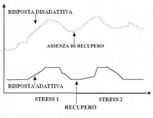 La risposta adattiva. Dato che gli stressors si susseguono nella vita, è importante ritornare alla normalità tra l'uno e l'altro. Se invece il recupero non c'è, aumenta rapidamente la possibilità di malattie