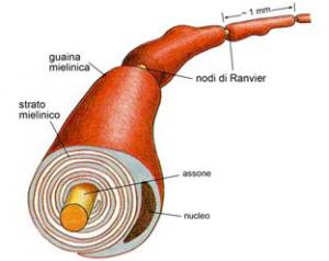 mielina