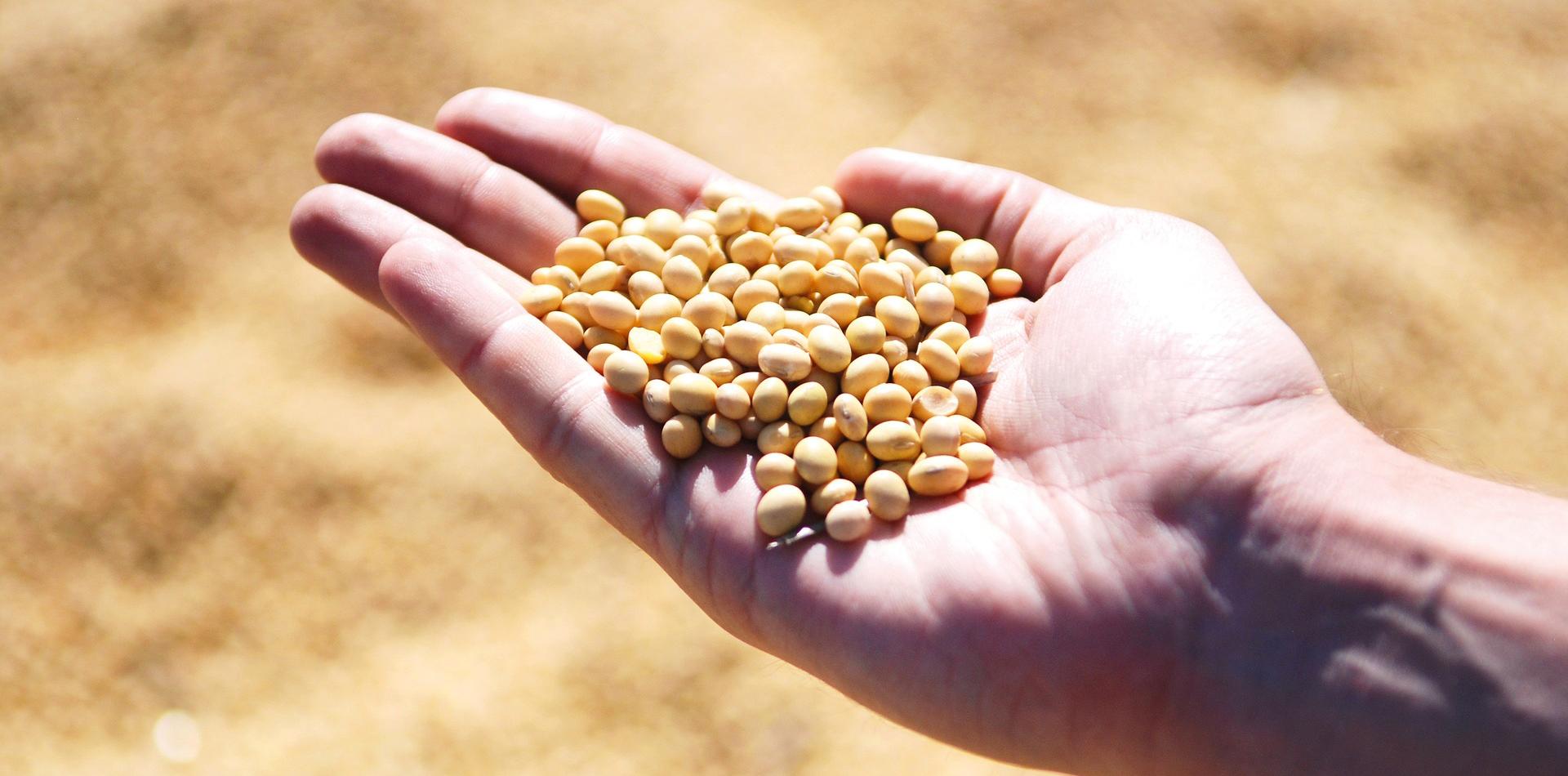 La Dieta Zona per Vegetariani e Vegani. Soia e Lupino