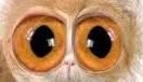 2 occhi