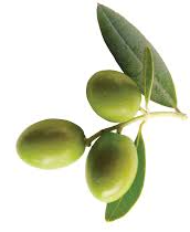 3 olive