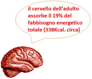 il cervello adulto assorbe