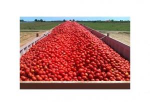 Pomodoro . Cibi per la Zona Mediterranea