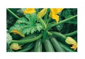 zucchine 3