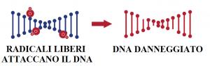 DNA DANNEGGIATO