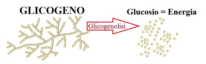 Endurance. Risparmiare Glicogeno