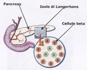 Carboidrati, gli effetti