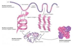 Proteine, struttura.