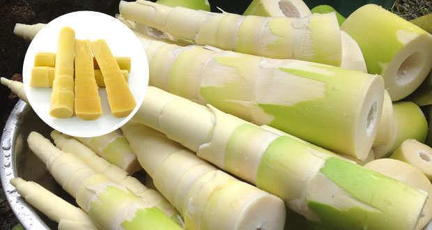 Germogli di Bambù